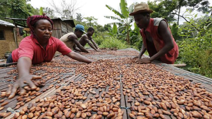 China may overtake Ghana in cocoa production – Kwabena Amofa Ababio. 46