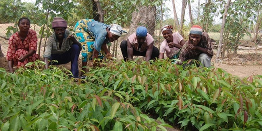 Farmers to boycott work for Agric Minister-designate's vetting 3