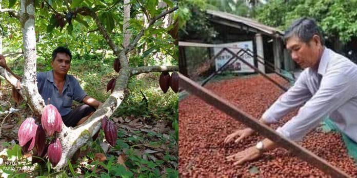 How China intends to kick Ghana, Ivory Coast as leading producers of cocoa. 46