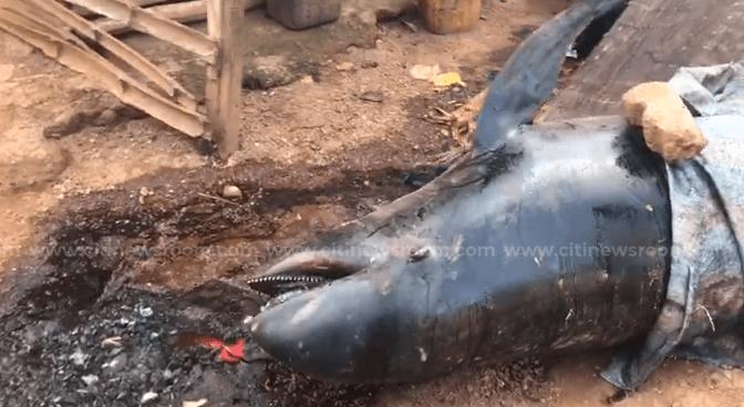 Washed-ashore fish weren't poisoned – EPA. 1